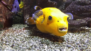 Venez visiter l'aquarium de Dunkerque (2017)