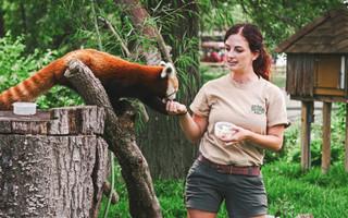 Soigneur Animalier : Apprendre les gestes qui sauvent