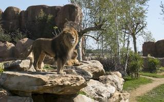 Admirer les animaux du monde à Beauval