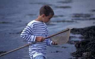 Saint-Malo : Compter les poissons