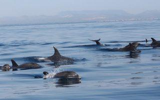 A la rencontre des baleines