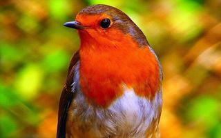 Expo en ligne : Les oiseaux en'chanteurs, à Blois
