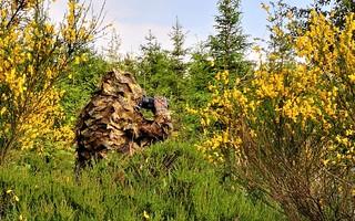 La nature dans les sens - Chasseur d'images au pays de Franchimont