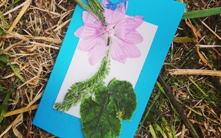 Carte postale végétale