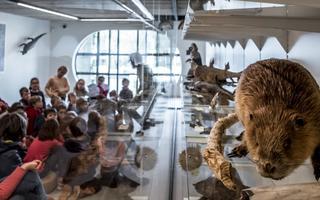 """Journée famille """"Exploration nature aux musées"""""""
