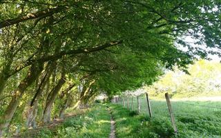 """Rendez-vous nature : """"Tel arbre (ou arbuste), tel fruit."""""""