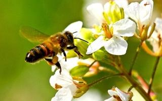 Fête des abeilles et de la biodiversité