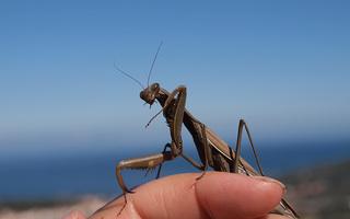 Visite de La Cité des Insectes