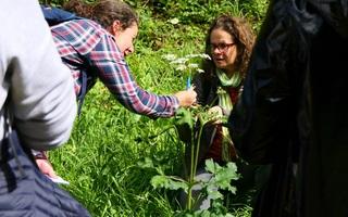 Sortie nature : Découverte des plantes médicinales