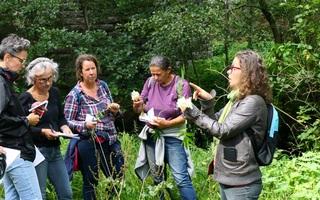 Sortie nature : Découverte des plantes comestibles