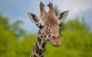 Visite du Zoo de Reynou