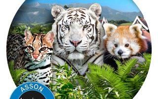 Balade au zoo d'Asson