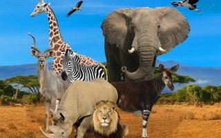 Balade au zoo du Bassin d'Arcachon
