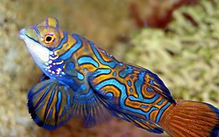 Visite de l'Aquarium du Limousin