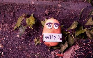L'histoire de l'humanité à travers celle de la patate