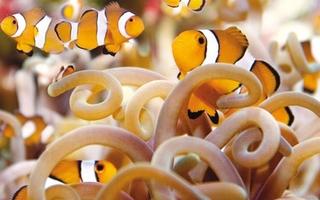 Visite de l'Aquarium de La Rochelle