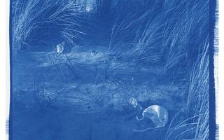 Remi Guerrin, Paysages en transition
