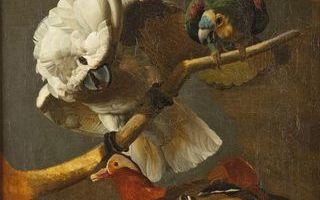 """""""Les oiseaux ont migré au musée !"""" - vacances de Toussaint"""