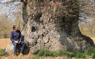 Mickaël Jézégou - Les arbres sont-ils intelligents ?